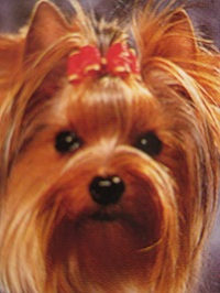 chien dominant