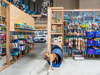 Boutique pour chien 1