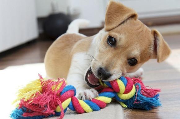jouets pour chien
