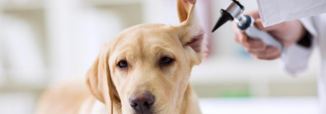 comment assurer son chien