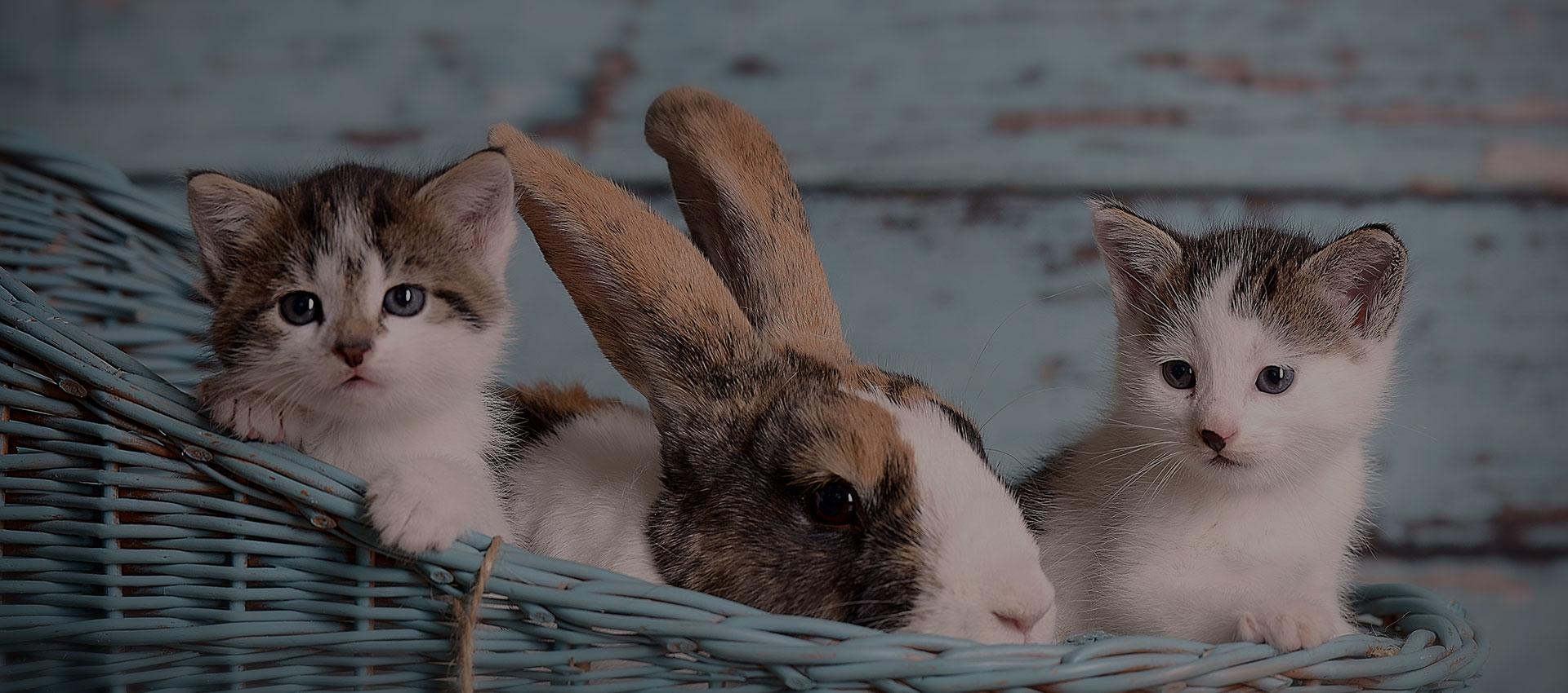 chat et autres annimaux